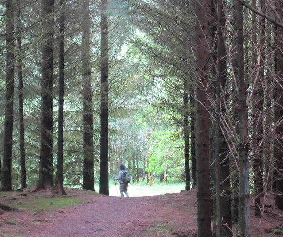 Walking through dense conifer forests on the north side of Loch Lochy.