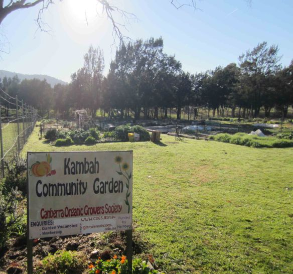 Two_bananas_Kambah_community_garden(b)