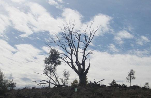 urambi_lone_tree